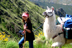 Booking (trips, etc.): Coming Soon: Llama Trek!