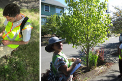 Free: Tree inventory needs volunteers!