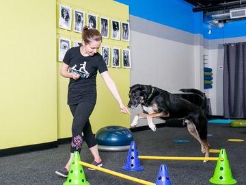 Booking (trips, etc.): Fitness Classes for you & your dog!