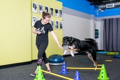 Booking (trips, stays, etc.): Fitness Classes for you & your dog!