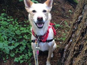 Booking (trips, etc.): Group Hikes for you & your dog