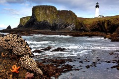 Free: Yaquina Head Outstanding Natural Area