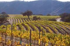 Booking (trips, etc.): Great Oregon Wine Tour in Willamette Valley