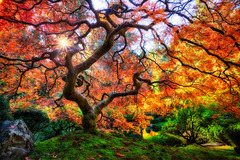 Varies: Portland Japanese Garden--Now Even Better!
