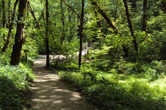 Free: Tryon Creek State Park