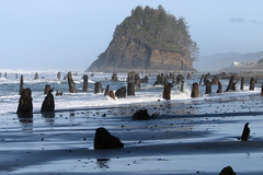 Free: Neskowin Ghost Forest