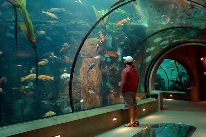Explore The Oregon Coast Aquarium