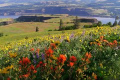 Free: Tom McCall Point Trail