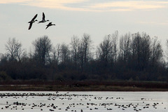 Booking (trips, stays, etc.): Birdwatching at Ankeny National Wildlife Refuge