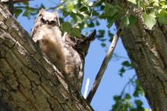 Free: Bird Watching in Malheur National Wildlife Refuge