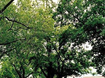 Free: Calling all Eastern Oregon tree lovers