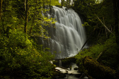 Free: University Falls Loop Hike in Tillamook State Forest
