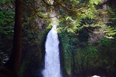 Varies/Learn More: Wahclella Falls Hike in the Columbia Gorge