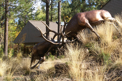 Varies/Learn More:  Visit the High Desert Museum