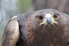 Varies: Raptor Watch Field Trip