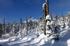 Donation: Ski at the Teacup Lake Nordic Area - Mt. Hood