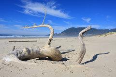 Free: Bayocean Spit Loop Hike