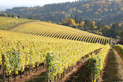 Booking (trips, stays, etc.): Willamette Valley Wine Tours