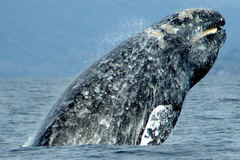 Free: Winter Whale Watching Week