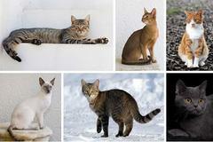 Varies: International Cat Show Portland