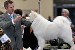 Varies: Rose City Classic Dog Show in Portland