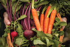 Free: Seed to Supper: Free 5 Week Gardening Workshop Series