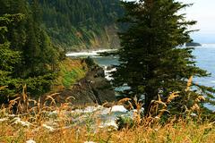 Free: Hart's Cove Hike