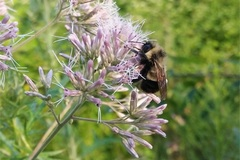 Booking (trips, etc.): A Pollinator's Plight