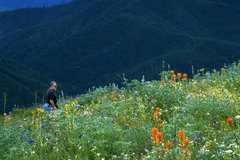Free: Mary's Peak North Ridge Hike