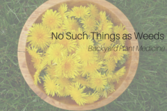 Donation: No Such Things as Weeds
