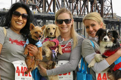 Varies: Oregon Humane Society's Doggie Dash Fundraiser & Run