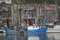 Free: Fish Tales: Traditions and Challenges of Seafood in Oregon