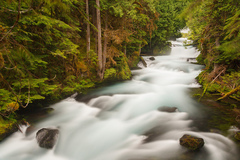 Free: McKenzie River Waterfall Loop Trail