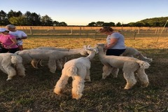 Booking (trips, stays, etc.): Alpaca Yoga + More at Marquam Hill Ranch
