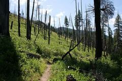 Free: Lookout Mountain Trail - Ochoco National Forest