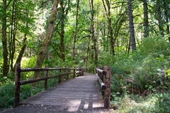 Free: Beazell Memorial Forest Hike