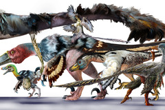 Booking (trips, etc.): Dinosaurs Take Flight: The Art of Archaeopteryx