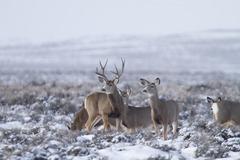 Booking (trips, etc.): Mule Deer Migration