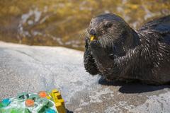 Varies: Sea Otter Awareness Day at the Oregon Coast Aquarium