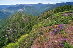 Free: Kings Mountain Hike - Tillamook State Forest