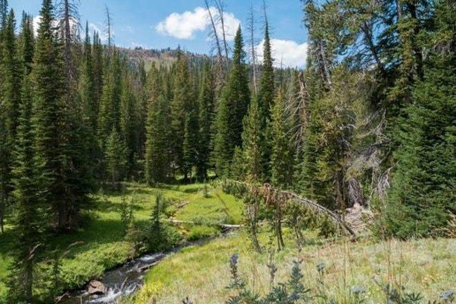 Tenderfoot Trail - Eagle Cap Wilderness - ShareOregon