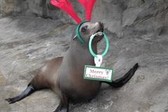 Donation: Sea of Lights @ Oregon Coast Aquarium