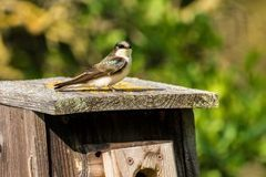 Booking (trips, etc.): Nest Box Building