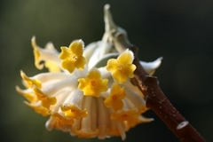 Booking (trips, etc.): Winter Interest Walk at Leach Botanical Garden