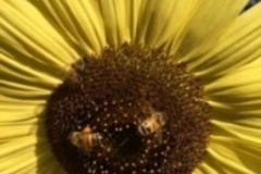 Booking (trips, etc.): HONEY BEE HIKES for children 2-5 years old