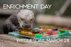 Free: Enrichment Day