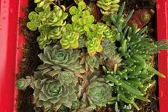 Booking (trips, etc.): Create A Living Wall Hanging with Sedum Chicks