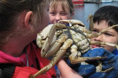 Booking (trips, etc.): Instar Summer Science Camp