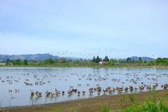 Free: Fernhill Wetlands