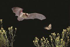 Booking (trips, etc.): Bat Walk